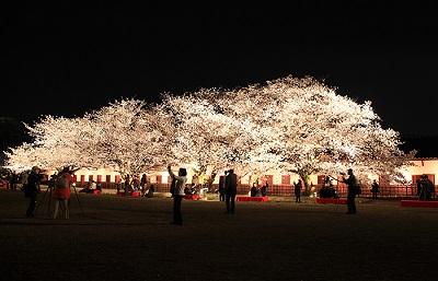 福岡 お花見,舞鶴公園