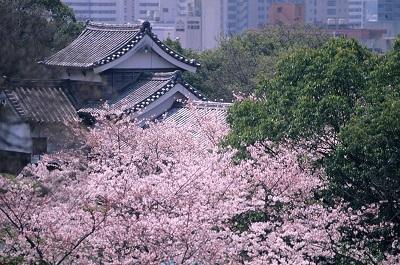 福岡 お花見