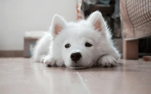 犬の椎間板ヘルニア