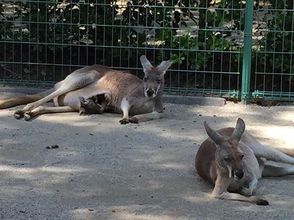 海の中道,福岡動物園