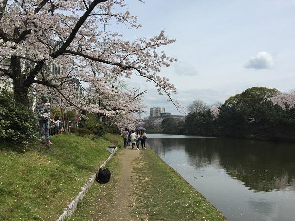 福岡桜,花見,舞鶴公園
