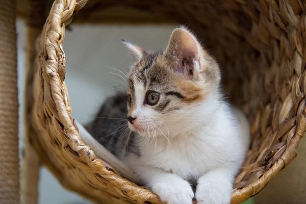 福岡 猫カフェ,里親 猫