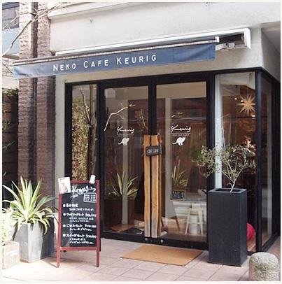 福岡 猫カフェ,里親 猫,キューリグ