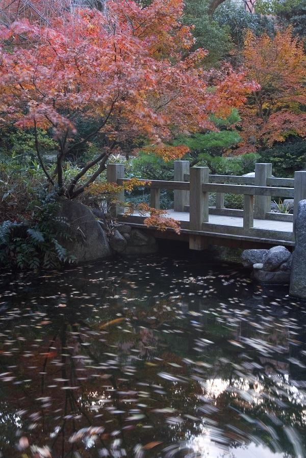 福岡 紅葉,福岡 紅葉 見頃,楽水園